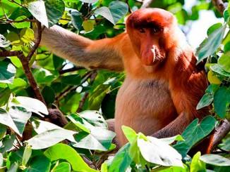 El Parque Nacional Bako en Borneo