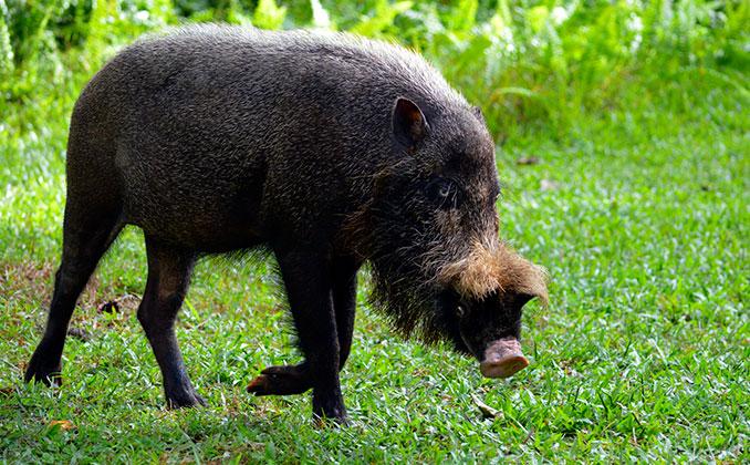 Animales del Parque Nacional Bako en la isla de Borneo