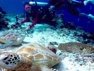 Practicar buceo y snorkel en Malasia en la isla de Sipadan