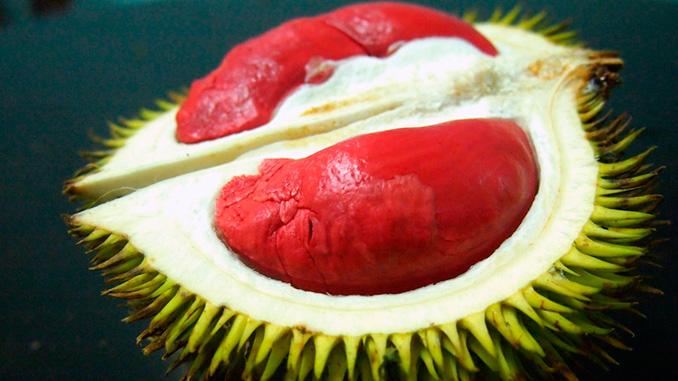 La fruta más exótica el durian rojo de Borneo