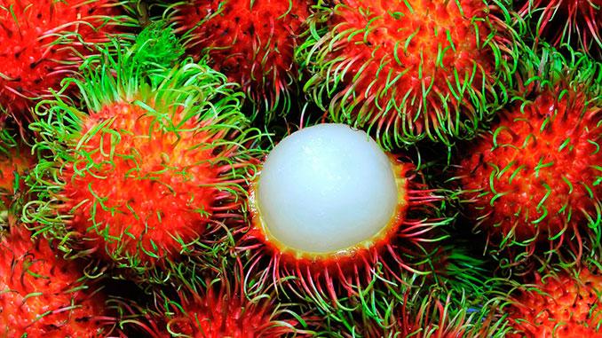 Frutas tropicales de Malasia - Malaysian fruit rambutan