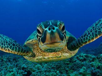 Visitar la Isla de las Tortugas en Borneo