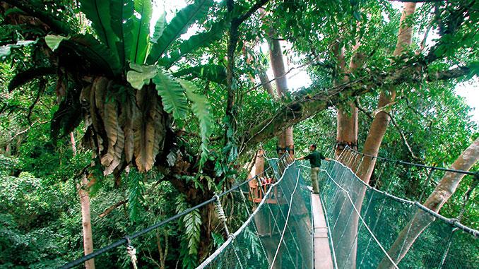 Paseo por canopy por Sandakan Borneo