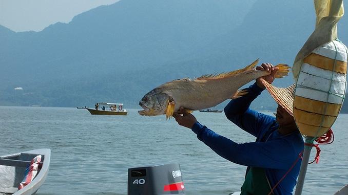 pesca en el río Sarawak