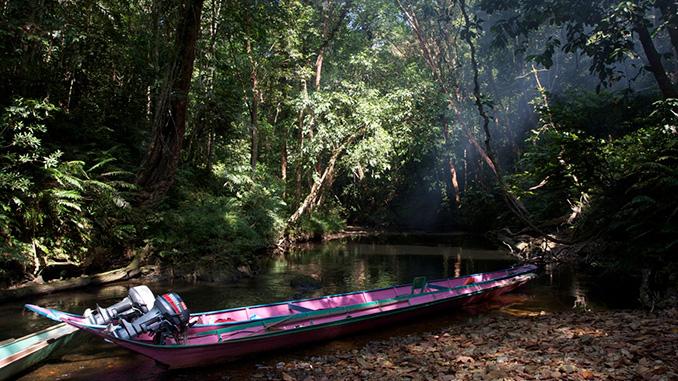 Vivir Borneo Malasia