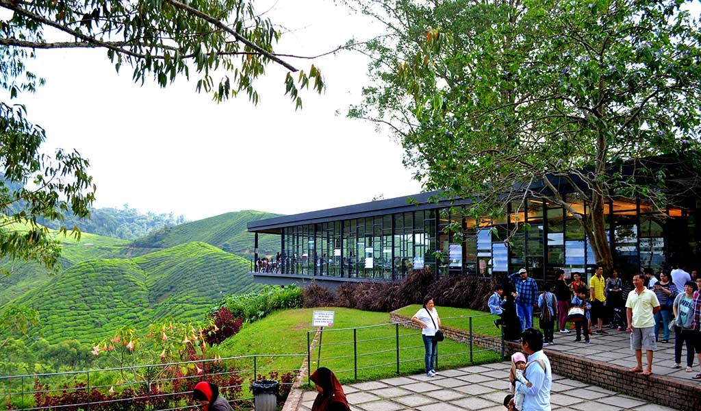 BohTea-Centre-Malasia-Cameron-Highlands