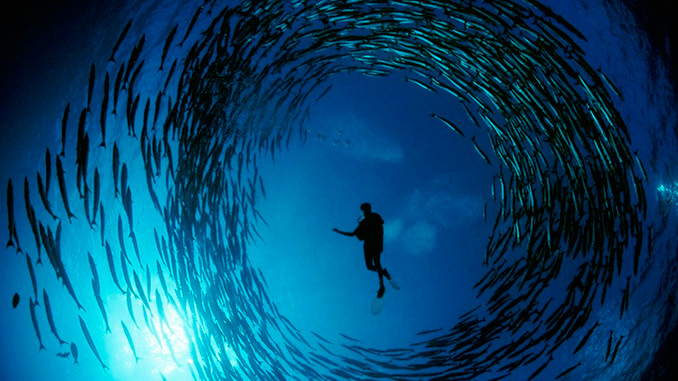Bucear en Malasia y ver barracudas