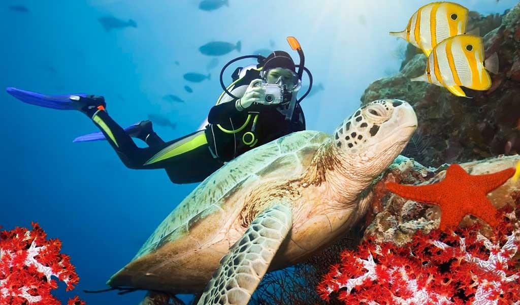 Si quieres bucear en Sipadán Borneo
