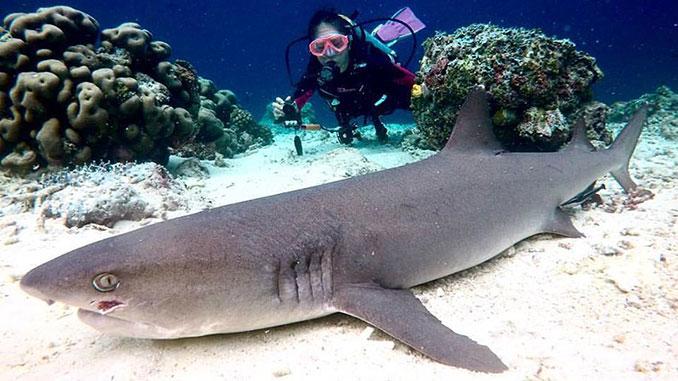 Buceo y snorkel en Malasia el mejor lugar para ver peces y tiburones
