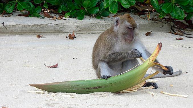 La playa de los monos en la isla de Penang