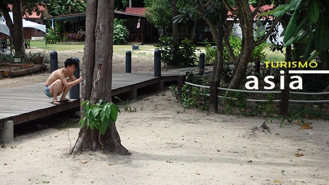Playas de Kota Kinabalu visita a Mamutik