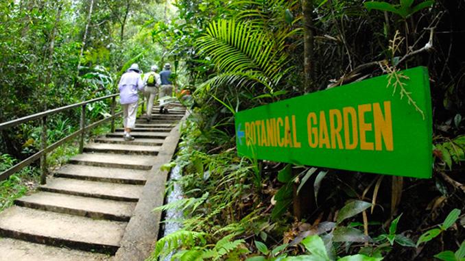El jardín botánico de orquídeas raras y orquídeas exóticas de Malasia