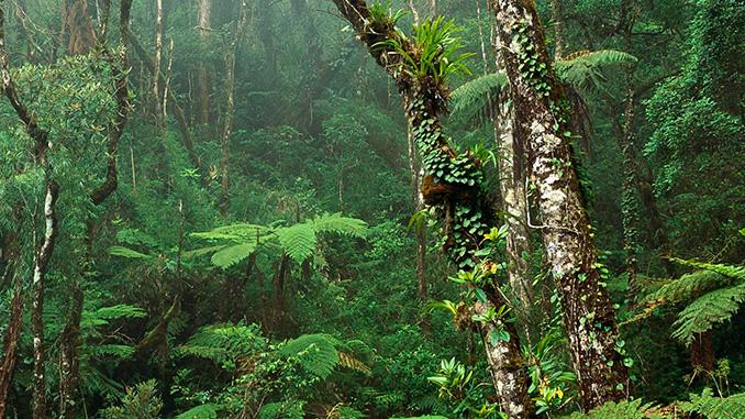 En el monte Kinabalu se encuentran las orquídeas raras y orquídeas exóticas de Malasia